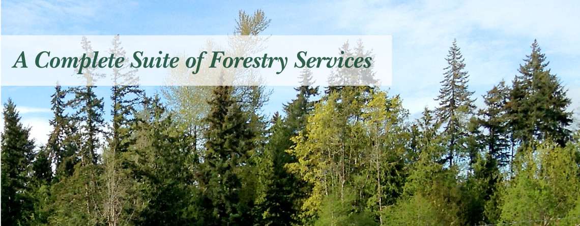 About JMurray Forestry